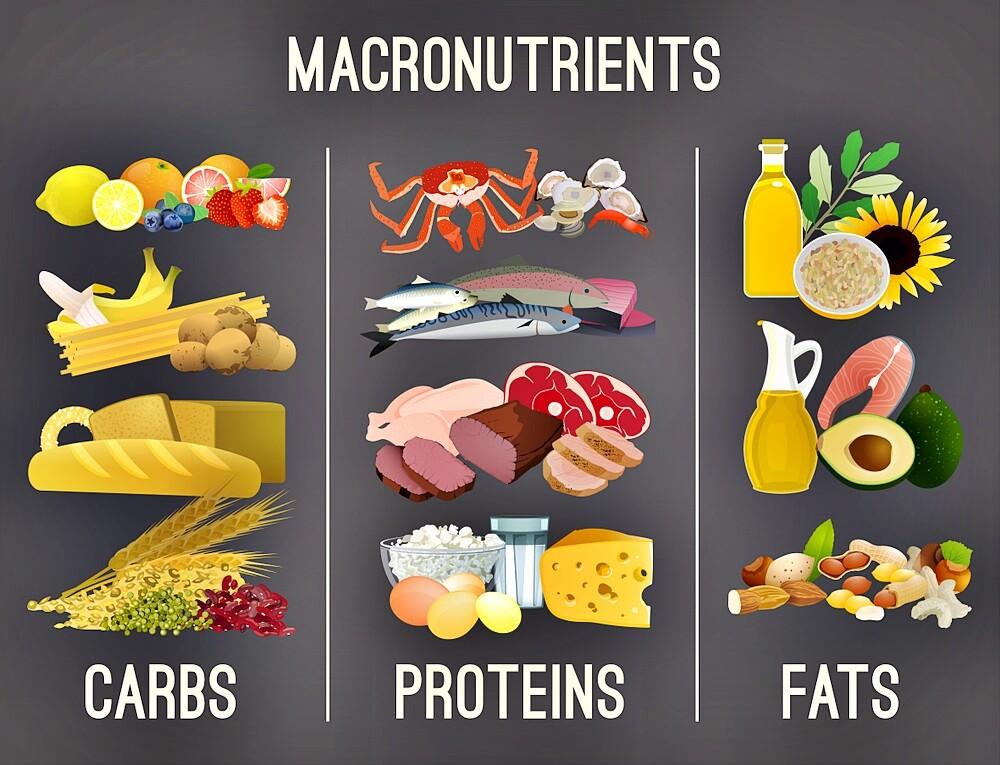 macronutrients 2